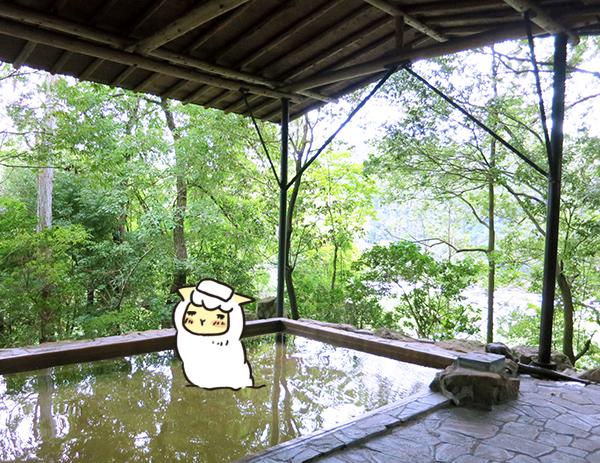 温泉のアルパカ