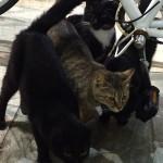 三条通の猫たち
